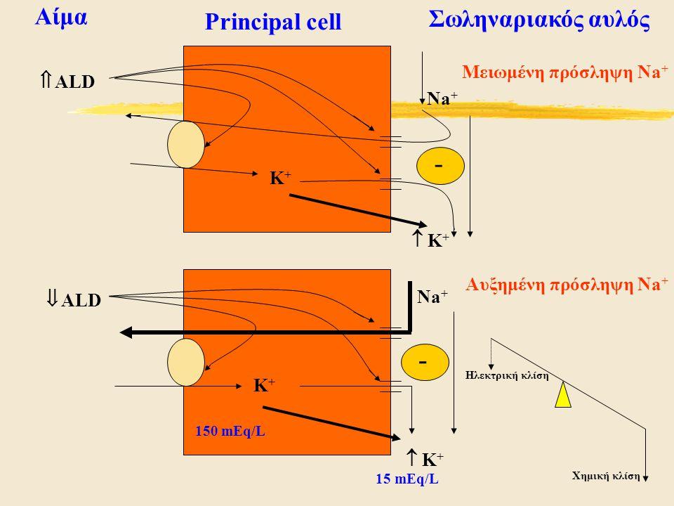 Principal cell Αίμα Σωληναριακός αυλός Αυξημένη πρόσληψη Na + Μειωμένη πρόσληψη Na +  ALD  ALD Na + K+K+ K+K+  K+ K+  K+ K+ - - 150 mEq/L 15 mEq