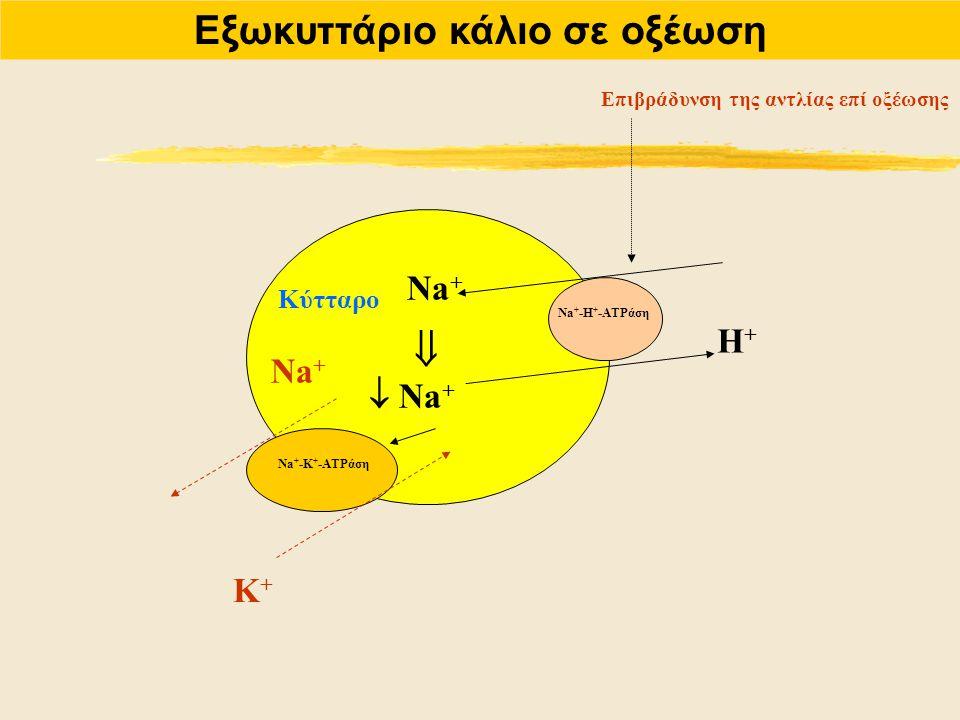 Εξωκυττάριο κάλιο σε οξέωση Na + Η+Η+ Na + -Η + -ATPάση Επιβράδυνση της αντλίας επί οξέωσης   Na + Na + -Κ + -ATPάση Na + Κ+Κ+ Κύτταρο