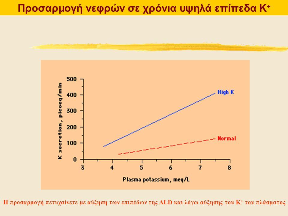 Προσαρμογή νεφρών σε χρόνια υψηλά επίπεδα Κ + Η προσαρμογή πετυχαίνετε με αύξηση των επιπέδων της ALD και λόγω αύξησης του Κ + του πλάσματος