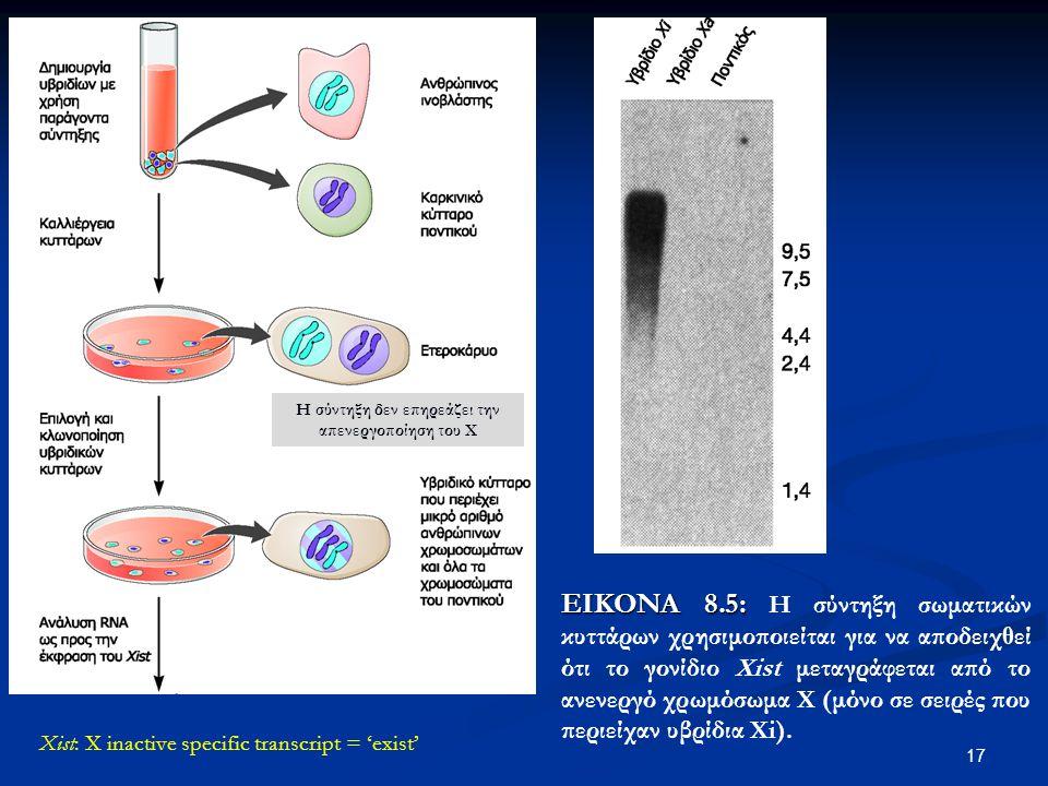 17 ΕΙΚΟΝΑ 8.5: ΕΙΚΟΝΑ 8.5: Η σύντηξη σωματικών κυττάρων χρησιμοποιείται για να αποδειχθεί ότι το γονίδιο Xist μεταγράφεται από το ανενεργό χρωμόσωμα Χ