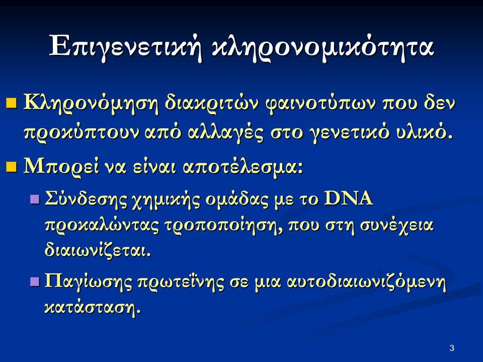 3 Επιγενετική κληρονομικότητα Κληρονόμηση διακριτών φαινοτύπων που δεν προκύπτουν από αλλαγές στο γενετικό υλικό. Κληρονόμηση διακριτών φαινοτύπων που