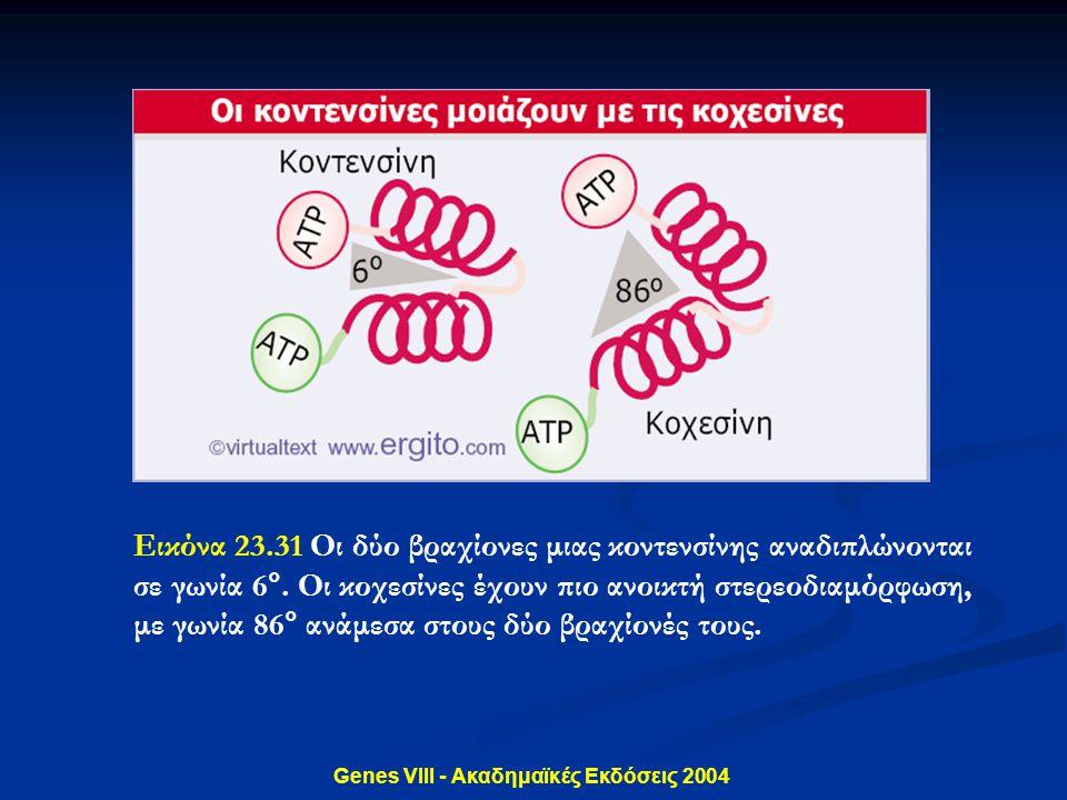 Genes VIII - Ακαδημαϊκές Εκδόσεις 2004 Εικόνα 23.31 Οι δύο βραχίονες μιας κοντενσίνης αναδιπλώνονται σε γωνία 6°. Οι κοχεσίνες έχουν πιο ανοικτή στερε