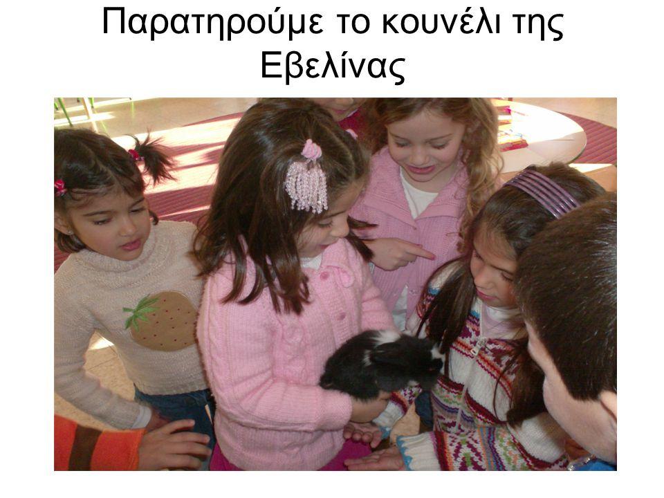 Παρατηρούμε το κουνέλι της Εβελίνας