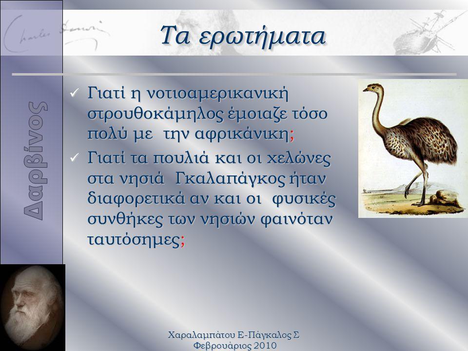 Χαραλαμπάτου Ε-Πάγκαλος Σ Φεβρουάριος 2010 Τα ερωτήματα üΓüΓüΓüΓιατί η νοτιοαμερικανική στρουθοκάμηλος έμοιαζε τόσο πολύ με την αφρικάνικη; üΓüΓüΓüΓιατί τα πουλιά και οι χελώνες στα νησιά Γκαλαπάγκος ήταν διαφορετικά αν και οι φυσικές συνθήκες των νησιών φαινόταν ταυτόσημες;