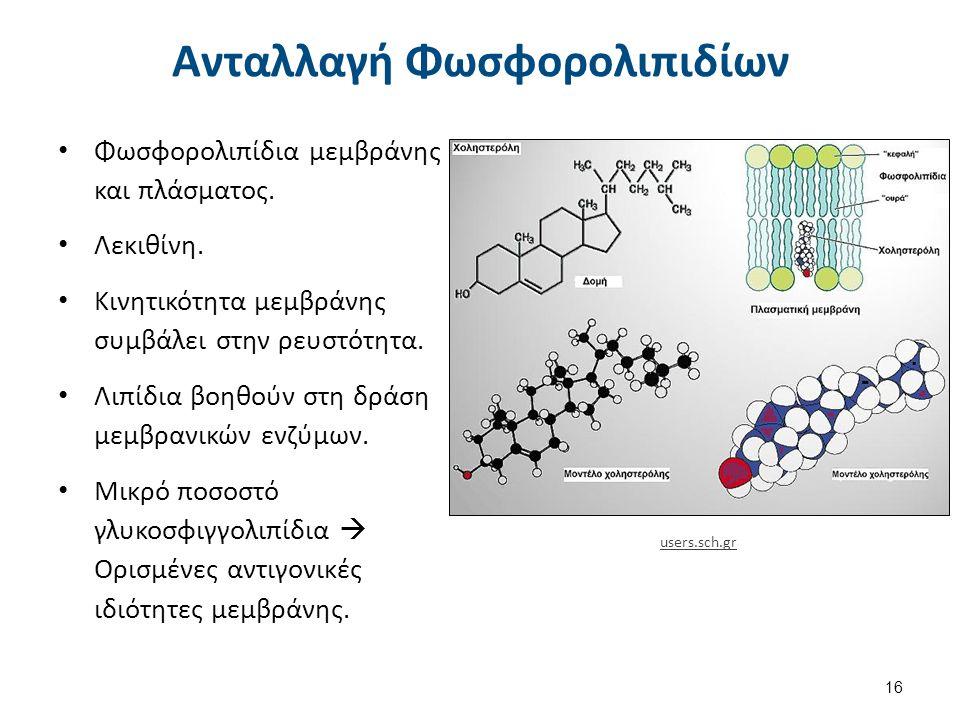 Ανταλλαγή Φωσφορολιπιδίων Φωσφορολιπίδια μεμβράνης και πλάσματος. Λεκιθίνη. Κινητικότητα μεμβράνης συμβάλει στην ρευστότητα. Λιπίδια βοηθούν στη δράση