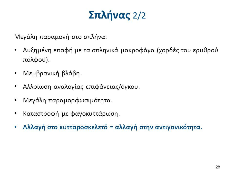 Σπλήνας 2/2 Μεγάλη παραμονή στο σπλήνα: Αυξημένη επαφή με τα σπληνικά μακροφάγα (χορδές του ερυθρού πολφού). Μεμβρανική βλάβη. Αλλοίωση αναλογίας επιφ