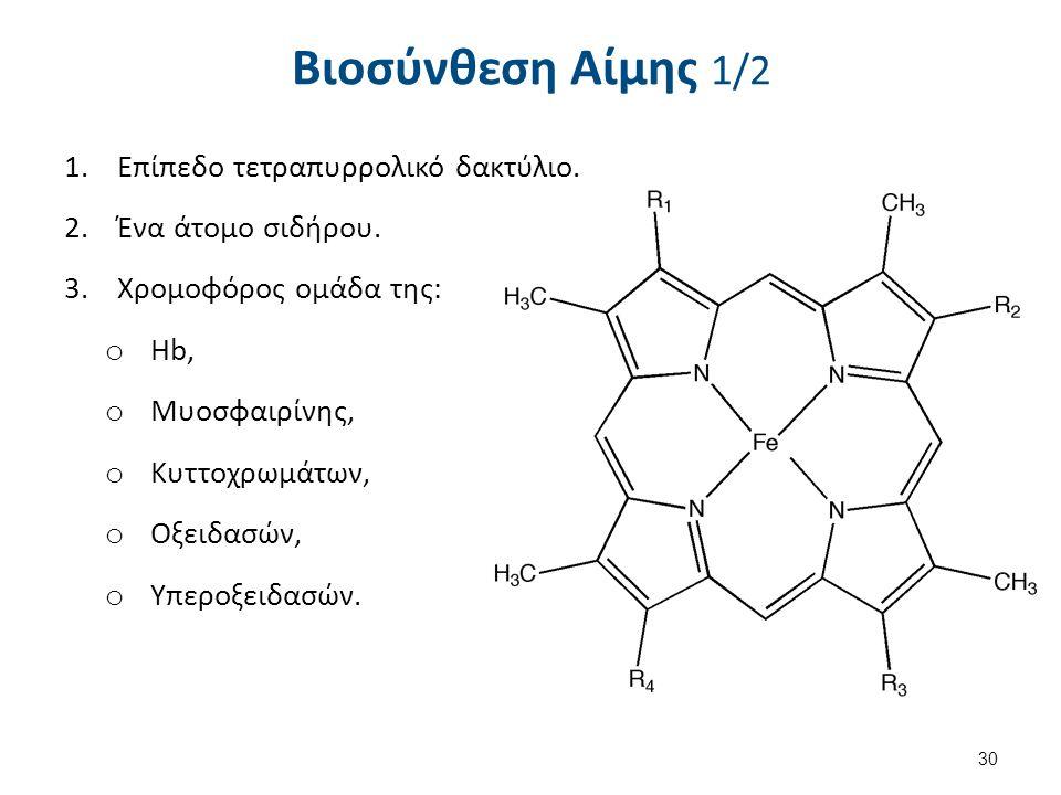 Βιοσύνθεση Αίμης 1/2 1.Επίπεδο τετραπυρρολικό δακτύλιο. 2.Ένα άτομο σιδήρου. 3.Χρομοφόρος ομάδα της: o Ηb, o Μυοσφαιρίνης, o Κυττοχρωμάτων, o Οξειδασώ