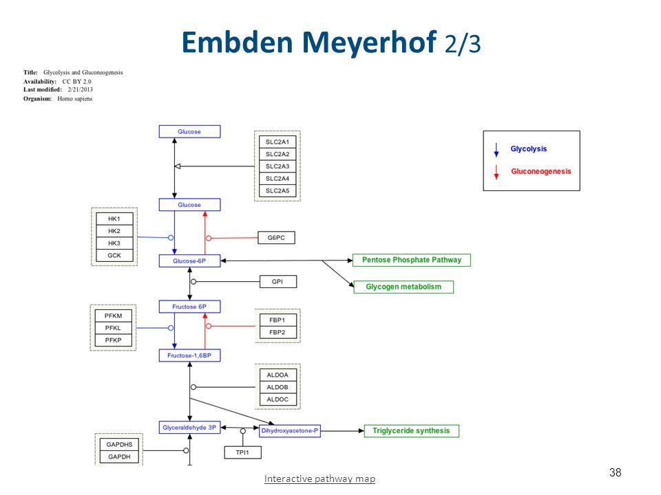 Embden Meyerhof 2/3 38 Interactive pathway map