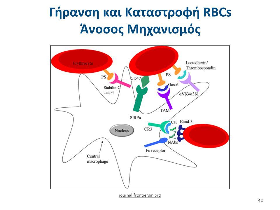 Γήρανση και Καταστροφή RBCs Άνοσος Μηχανισμός 40 journal.frontiersin.org