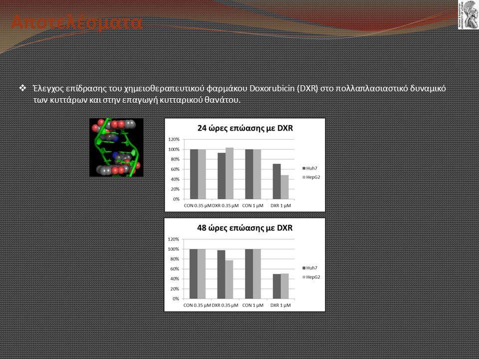 Αποτελέσματα  Έλεγχος επίδρασης του χημειοθεραπευτικού φαρμάκου Doxorubicin (DXR) στο πολλαπλασιαστικό δυναμικό των κυττάρων και στην επαγωγή κυτταρικού θανάτου.
