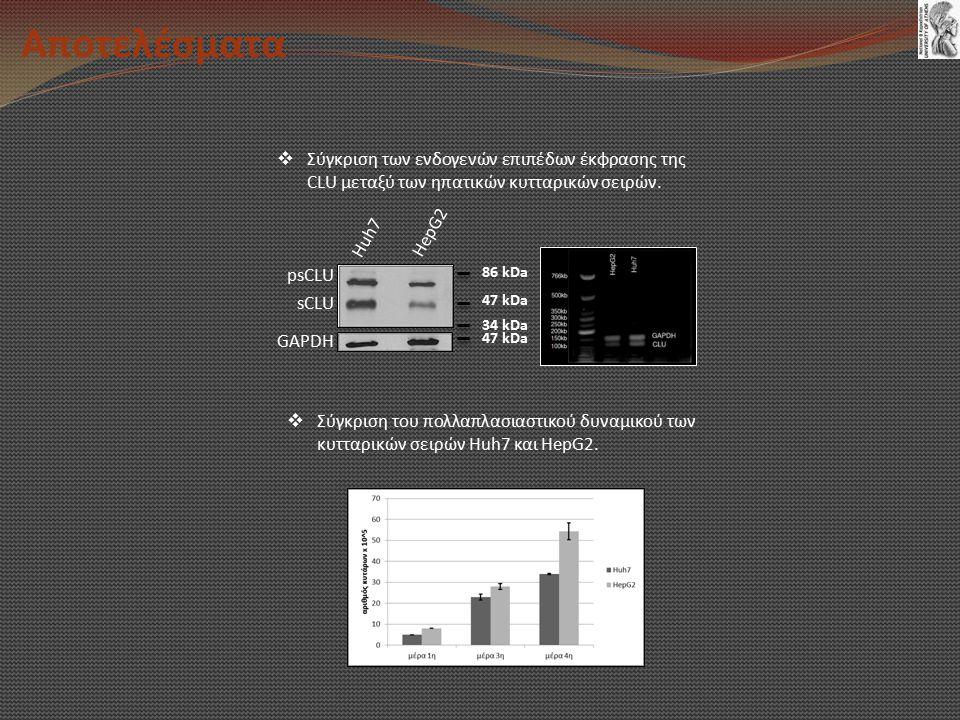 Αποτελέσματα psCLU sCLU GAPDH Huh7 HepG2 86 kDa 47 kDa 34 kDa 47 kDa  Σύγκριση των ενδογενών επιπέδων έκφρασης της CLU μεταξύ των ηπατικών κυτταρικών σειρών.