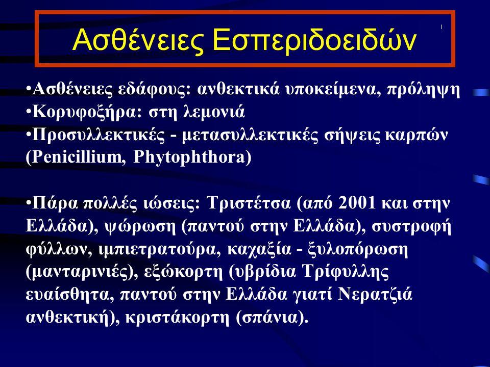 Ασθένειες Εσπεριδοειδών Ασθένειες εδάφους: ανθεκτικά υποκείμενα, πρόληψη Κορυφοξήρα: στη λεμονιά Προσυλλεκτικές - μετασυλλεκτικές σήψεις καρπών (Penic