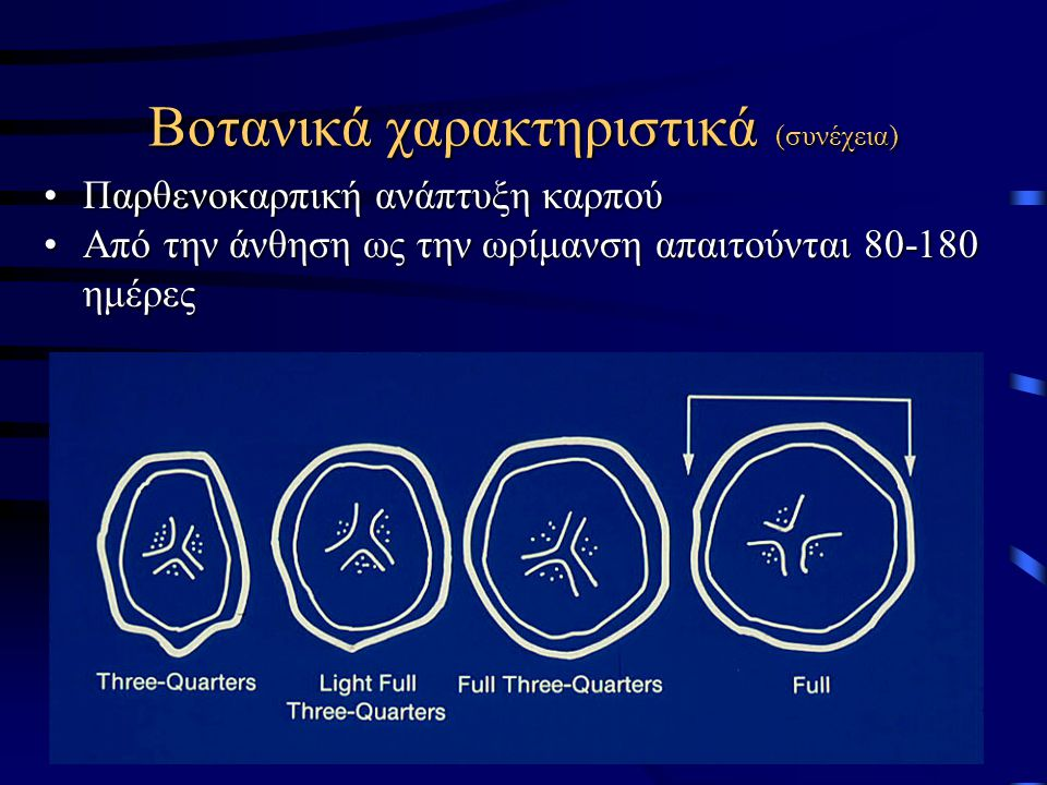 Βοτανικά χαρακτηριστικά (συνέχεια) Παρθενοκαρπική ανάπτυξη καρπούΠαρθενοκαρπική ανάπτυξη καρπού Από την άνθηση ως την ωρίμανση απαιτούνται 80-180 ημέρ