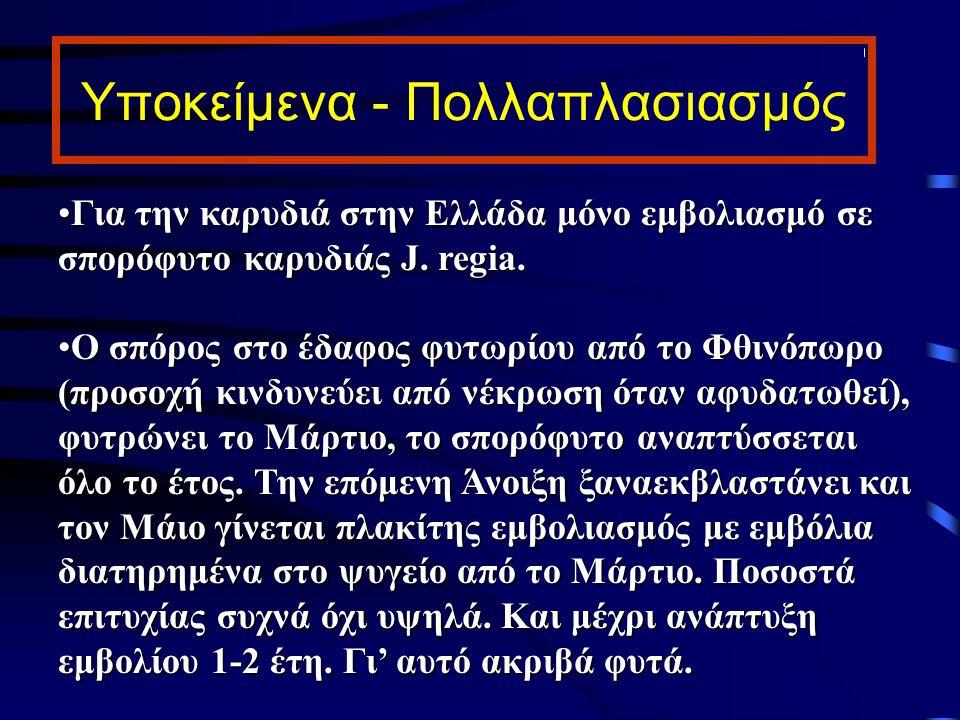 Υποκείμενα - Πολλαπλασιασμός Για την καρυδιά στην Ελλάδα μόνο εμβολιασμό σε σπορόφυτο καρυδιάς J. regia.Για την καρυδιά στην Ελλάδα μόνο εμβολιασμό σε