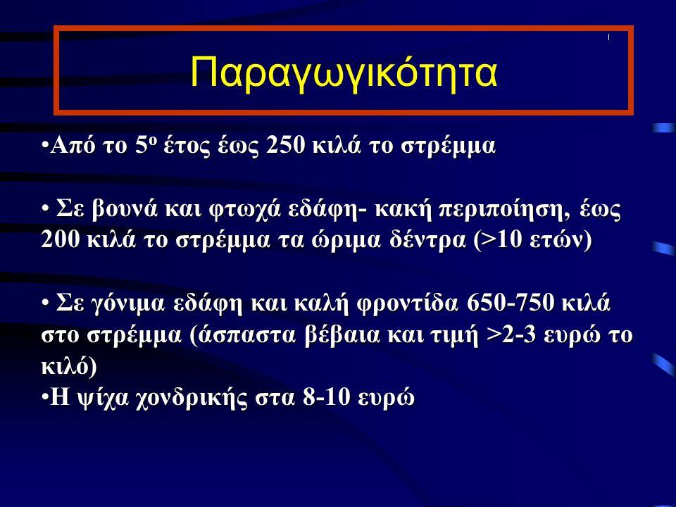 Παραγωγικότητα Από το 5 ο έτος έως 250 κιλά το στρέμμαΑπό το 5 ο έτος έως 250 κιλά το στρέμμα Σε βουνά και φτωχά εδάφη- κακή περιποίηση, έως 200 κιλά
