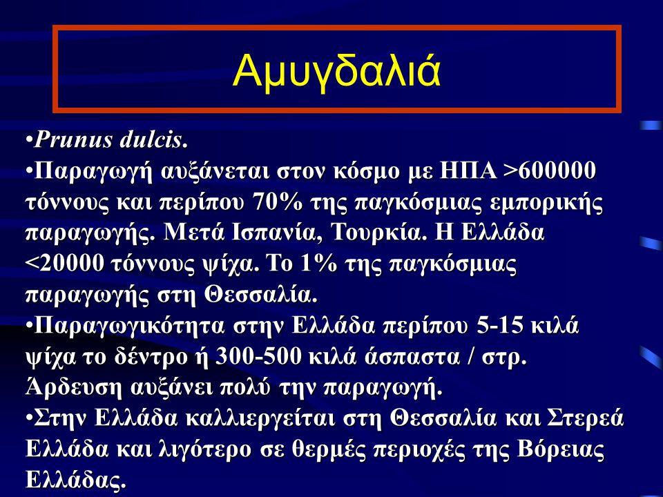 Ποικιλίες αμυγδαλιάς στην Ελλάδα Ferragnes: για κατανάλωση σαν ξηρός καρπός, μεγάλη ψίχα, παραγωγικό δέντρο (>34% Ελλάδας).Ferragnes: για κατανάλωση σαν ξηρός καρπός, μεγάλη ψίχα, παραγωγικό δέντρο (>34% Ελλάδας).