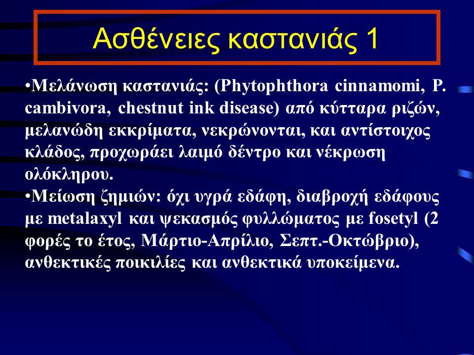 Ασθένειες καστανιάς 1 Μελάνωση καστανιάς: (Phytophthora cinnamomi, P. cambivora, chestnut ink disease) από κύτταρα ριζών, μελανώδη εκκρίματα, νεκρώνον