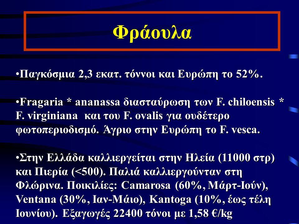 Φράουλα Παγκόσμια 2,3 εκατ. τόννοι και Ευρώπη το 52%.Παγκόσμια 2,3 εκατ. τόννοι και Ευρώπη το 52%. Fragaria * ananassa διασταύρωση των F. chiloensis *