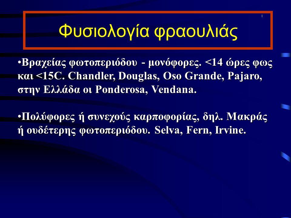 Φυσιολογία φραουλιάς Βραχείας φωτοπεριόδου - μονόφορες. <14 ώρες φως και <15C. Chandler, Douglas, Oso Grande, Pajaro, στην Ελλάδα οι Ponderosa, Vendan