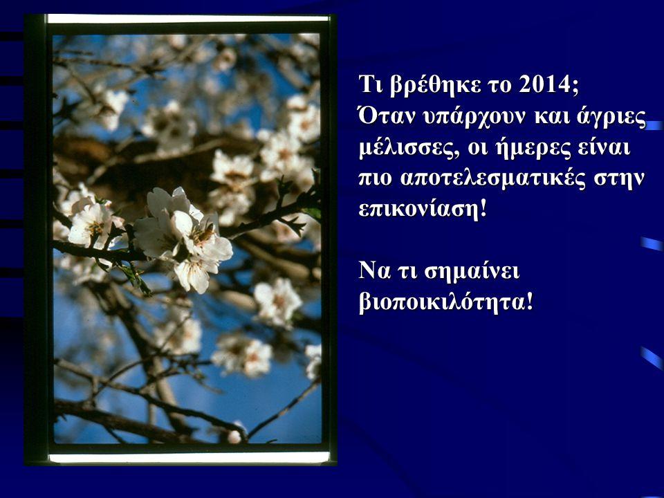 Ελιά: σημασία για την Ελλάδα Ασχολείται το 1/3 του Ελληνικού αγροτικού πληθυσμού.