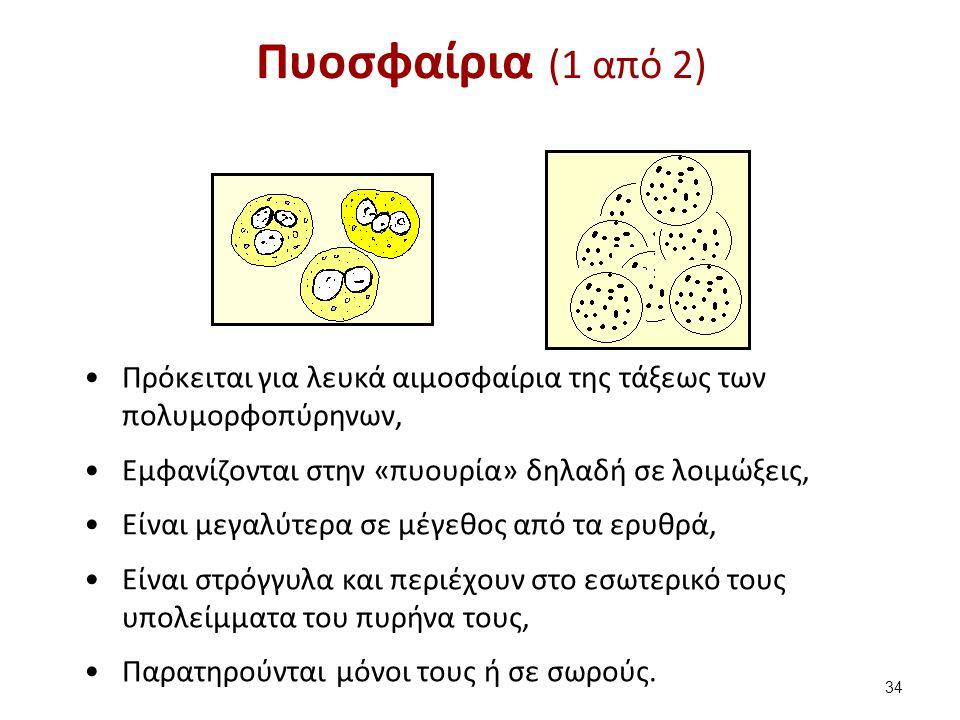 Πυοσφαίρια (1 από 2) Πρόκειται για λευκά αιμοσφαίρια της τάξεως των πολυμορφοπύρηνων, Εμφανίζονται στην «πυουρία» δηλαδή σε λοιμώξεις, Είναι μεγαλύτερ