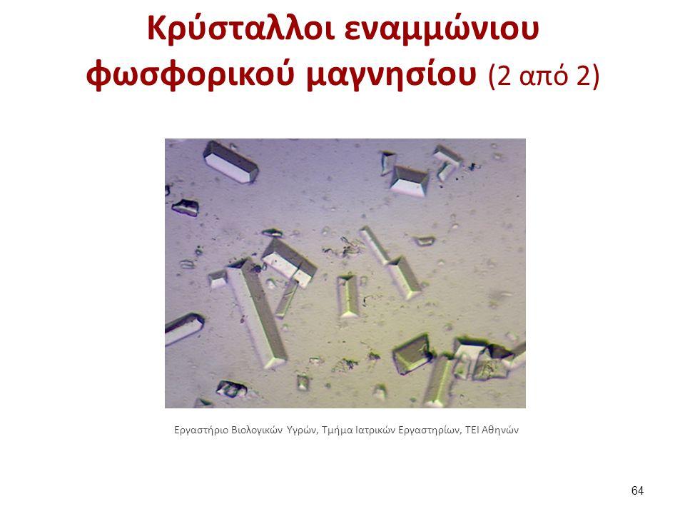 Κρύσταλλοι εναμμώνιου φωσφορικού μαγνησίου (2 από 2) 64 Εργαστήριο Βιολογικών Υγρών, Τμήμα Ιατρικών Εργαστηρίων, ΤΕΙ Αθηνών