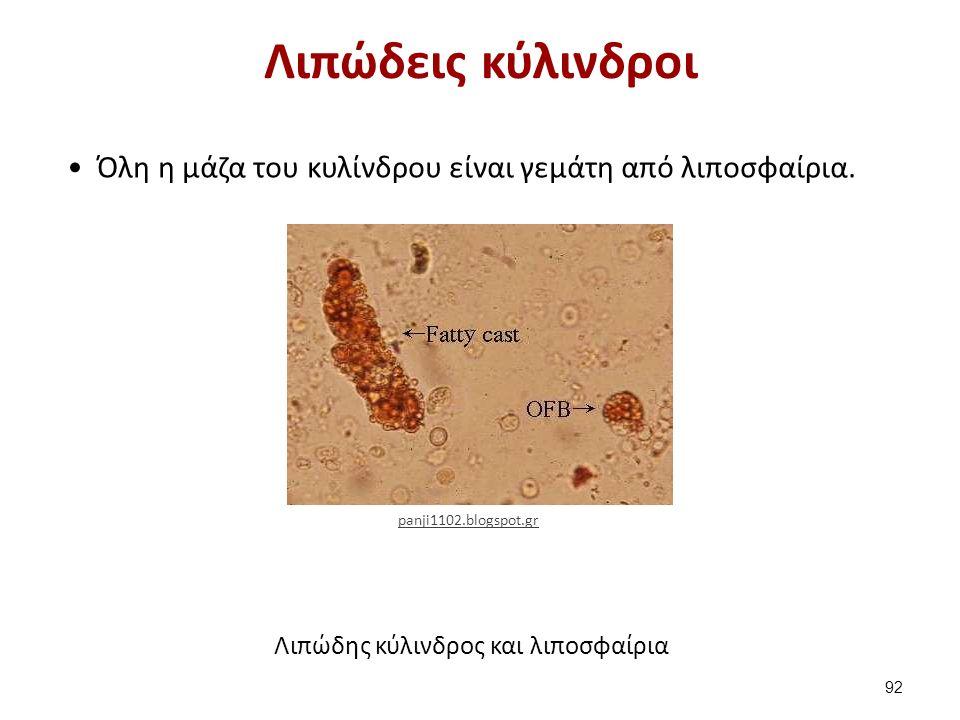 Λιπώδεις κύλινδροι Όλη η μάζα του κυλίνδρου είναι γεμάτη από λιποσφαίρια. Λιπώδης κύλινδρος και λιποσφαίρια 92 panji1102.blogspot.gr