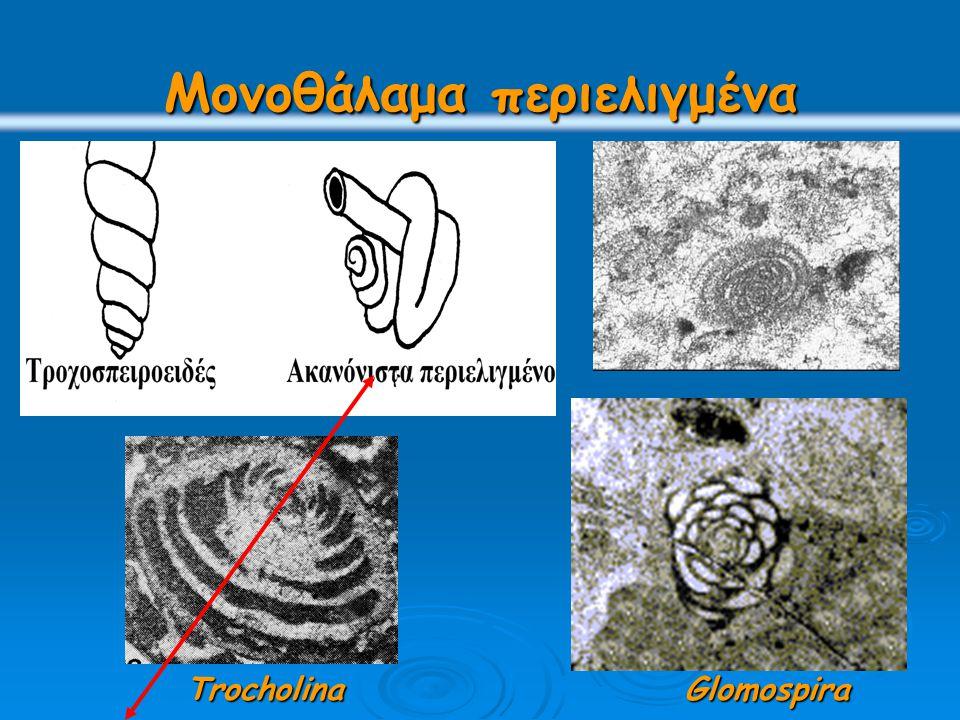 Μονοθάλαμα περιελιγμένα TrocholinaGlomospira