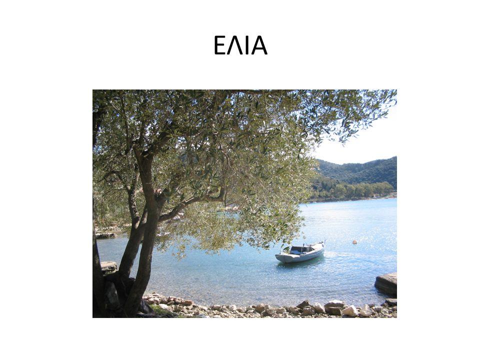 Ιθάκη - Άγιος Ιωάννης Δένδρα μεγαλύτερα των 1600 χρόνων!!!