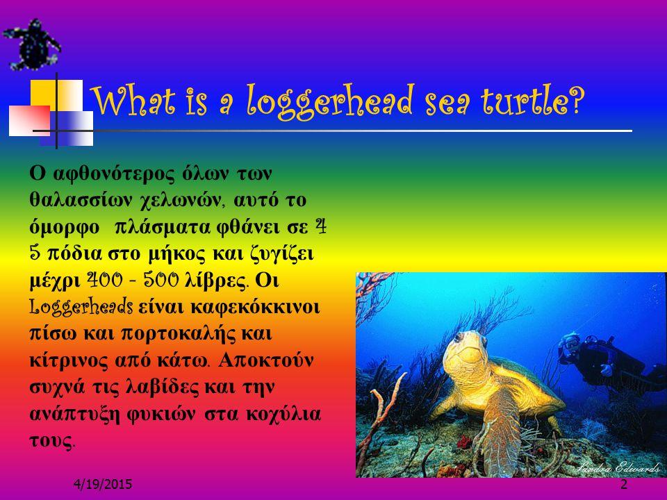 4/19/20152 What is a loggerhead sea turtle.