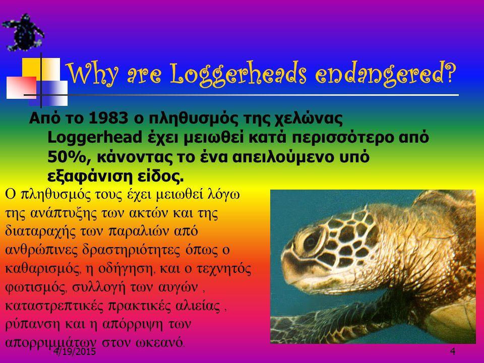 4/19/20153 Did you know… Οι Loggerheads είναι αερόβια ερπετά, το επιστημονικό όνομά τους είναι Caretta.