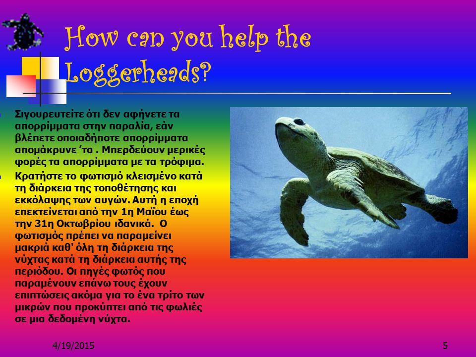 4/19/20155 How can you help the Loggerheads.