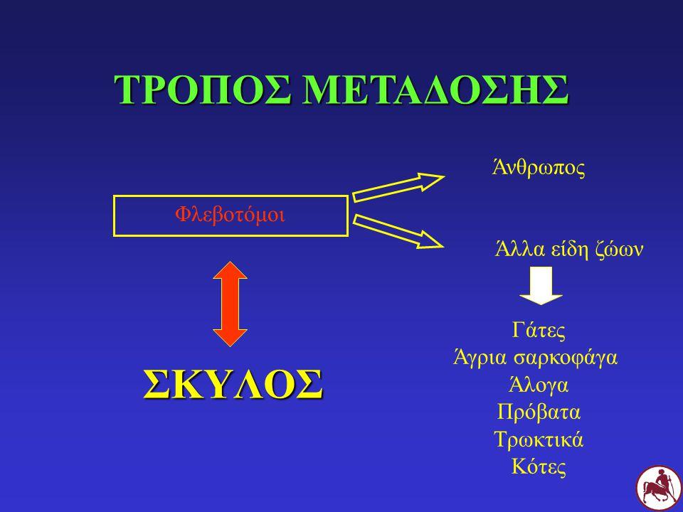 ΠΡΟΤΕΙΝΟΜΕΝΗ ΘΕΡΑΠΕΙΑ (I) Αντιμονιακή μεγλουμίνη x 1 μήνα + αλλοπουρινόλη x 6 μήνες Κλινική ίαση, φυσιολογικά αποτελέσματα αιματολογικής, βιοχημικών εξετάσεων και ανάλυσης ούρων (± πρωτεϊνουρία), αρνητική μικροσκοπική εξέταση LN (± BM), μείωση τίτλου IFAT Αλλοπουρινόλη 20mg/Kg, SID x 1 εβδομάδα/μήνα Επανεξετάσεις κάθε 6 μήνες εφόρου ζωής Αντιμονιακή μεγλουμίνη x 1 μήνα + αλλοπουρινόλη x 6 μήνες Κλινική ίαση, φυσιολογικά αποτελέσματα αιματολογικής, βιοχημικών εξετάσεων και ανάλυσης ούρων (± πρωτεϊνουρία), αρνητική μικροσκοπική εξέταση LN (± BM), μείωση τίτλου IFAT Αλλοπουρινόλη 20mg/Kg, SID x 1 εβδομάδα/μήνα Επανεξετάσεις κάθε 6 μήνες εφόρου ζωής