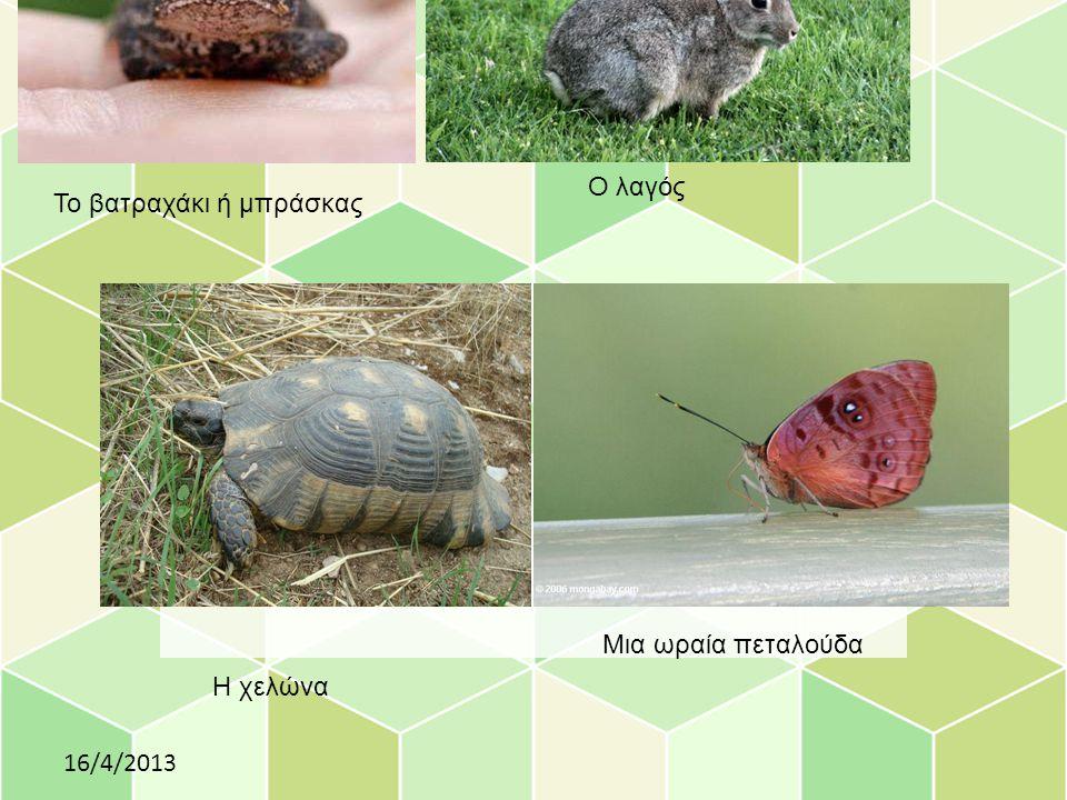 Click to edit Master subtitle style 16/4/2013 Το βατραχάκι ή μπράσκας Ο λαγός Η χελώνα Μια ωραία πεταλούδα