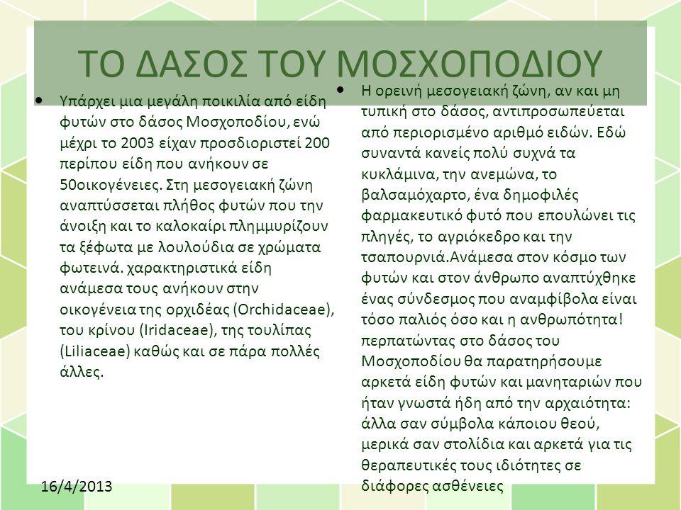 ΤΟ ΔΑΣΟΣ ΤΟΥ ΜΟΣΧΟΠΟΔΙΟΥ Υπάρχει μια μεγάλη ποικιλία από είδη φυτών στο δάσος Μοσχοποδίου, ενώ μέχρι το 2003 είχαν προσδιοριστεί 200 περίπου είδη που ανήκουν σε 50οικογένειες.