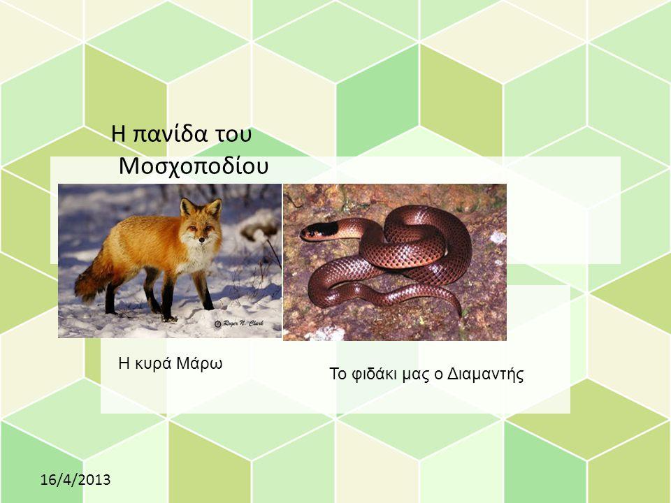 Click to edit Master subtitle style Η πανίδα του Μοσχοποδίου 16/4/2013 Η κυρά Μάρω Το φιδάκι μας ο Διαμαντής