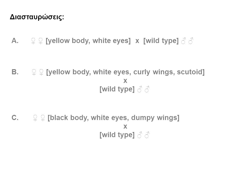 Διασταυρώσεις: Α. ♀ ♀ [yellow body, white eyes] x [wild type] ♂ ♂ B. ♀ ♀ [yellow body, white eyes, curly wings, scutoid] x [wild type] ♂ ♂ C. ♀ ♀ [bla
