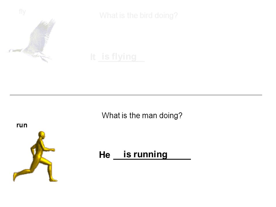fly run What is the bird doing. What is the man doing.