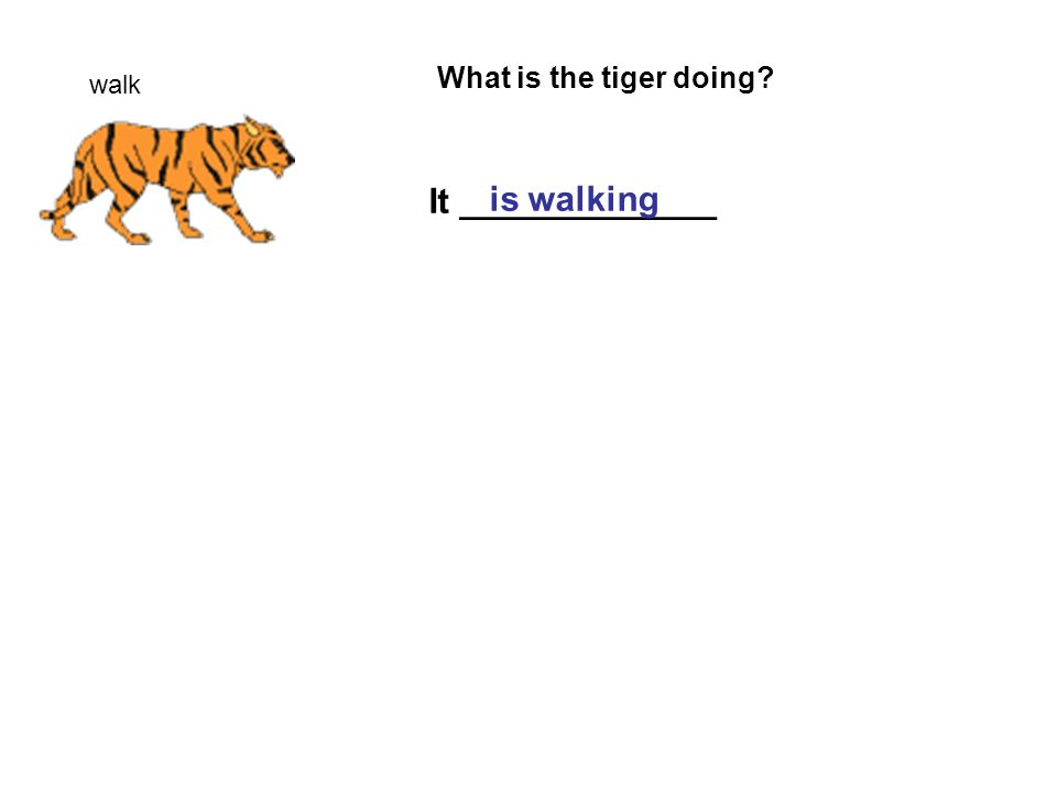 walk What is the tiger doing It _____________ is walking