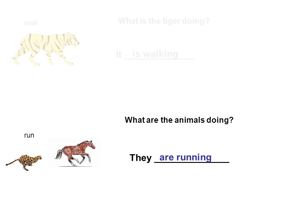 walk What is the tiger doing. It _____________ is walking run What are the animals doing.