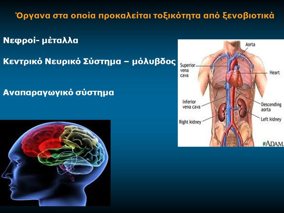 Όργανα στα οποία προκαλείται τοξικότητα από ξενοβιοτικά Νεφρoί- μέταλλα Κεντρικό Νευρικό Σύστημα – μόλυβδος Αναπαραγωγικό σύστημα