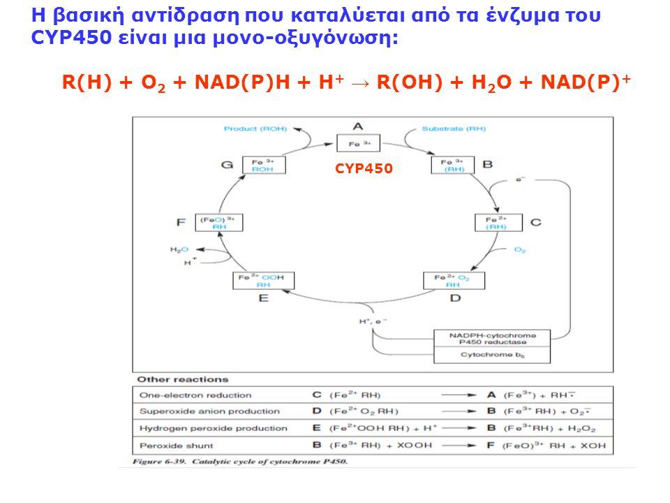 Η βασική αντίδραση που καταλύεται από τα ένζυμα του CYP450 είναι μια μονο-οξυγόνωση: R(H) + O 2 + NAD(P)H + H + → R(OH) + H 2 O + NAD(P) + CYP450