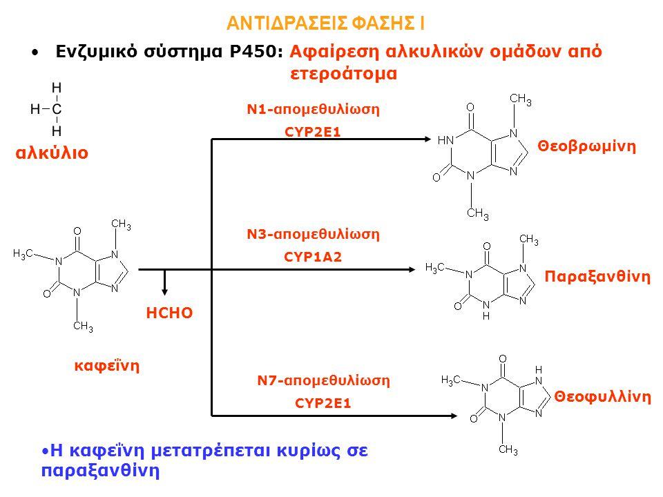 Ενζυμικό σύστημα Ρ450: Αφαίρεση αλκυλικών ομάδων από ετεροάτομα ΑΝΤΙΔΡΑΣΕΙΣ ΦΑΣΗΣ Ι καφεΐνη Θεοβρωμίνη Παραξανθίνη Θεοφυλλίνη Ν1-απομεθυλίωση CYP2E1 Ν3-απομεθυλίωση CYP1A2 Ν7-απομεθυλίωση CYP2E1 H καφεΐνη μετατρέπεται κυρίως σε παραξανθίνη HCHO αλκύλιο