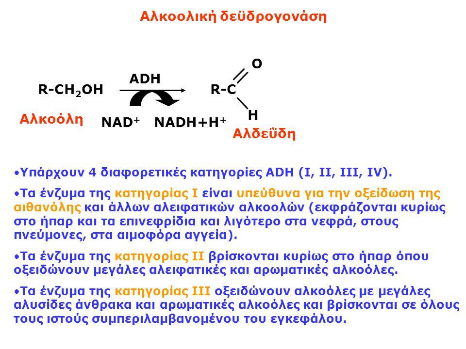Aλκοολική δεϋδρογονάση R-CH 2 OH ADH NAD + NADH+Η + R-C O H Αλκοόλη Αλδεΰδη Υπάρχουν 4 διαφορετικές κατηγορίες ADH (I, II, III, IV).