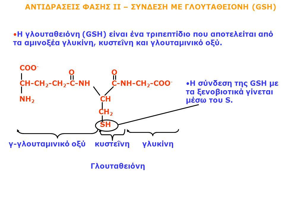 ΑΝΤΙΔΡΑΣΕΙΣ ΦΑΣΗΣ ΙΙ – ΣΥΝΔΕΣΗ ΜΕ ΓΛΟΥΤΑΘΕΙΟΝΗ (GSH) Η γλουταθειόνη (GSH) είναι ένα τριπεπτίδιο που αποτελείται από τα αμινοξέα γλυκίνη, κυστεΐνη και γλουταμινικό οξύ.