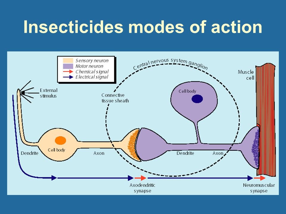 Insecticides modes of action