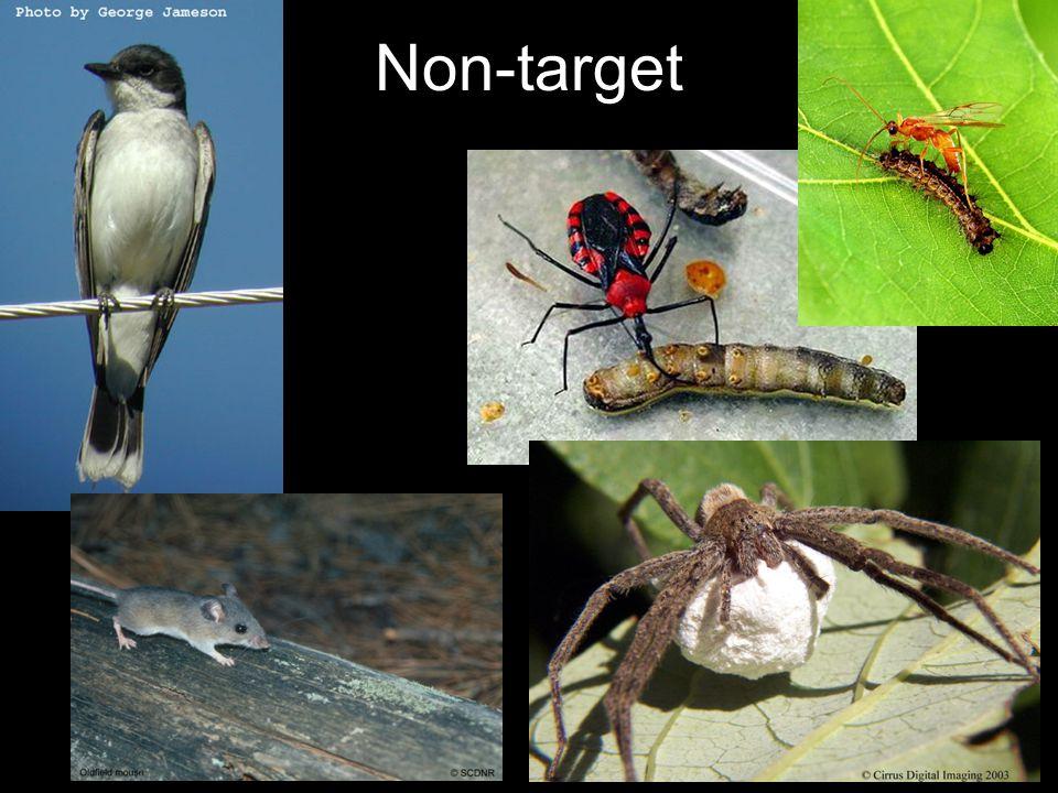 Τοξικότητα στους φυσικούς εχθρούς των εντόμων Τα περισσότερα εντομοκτόνα επιδρούν σε πληθυσμούς ωφέλιμων εντόμων