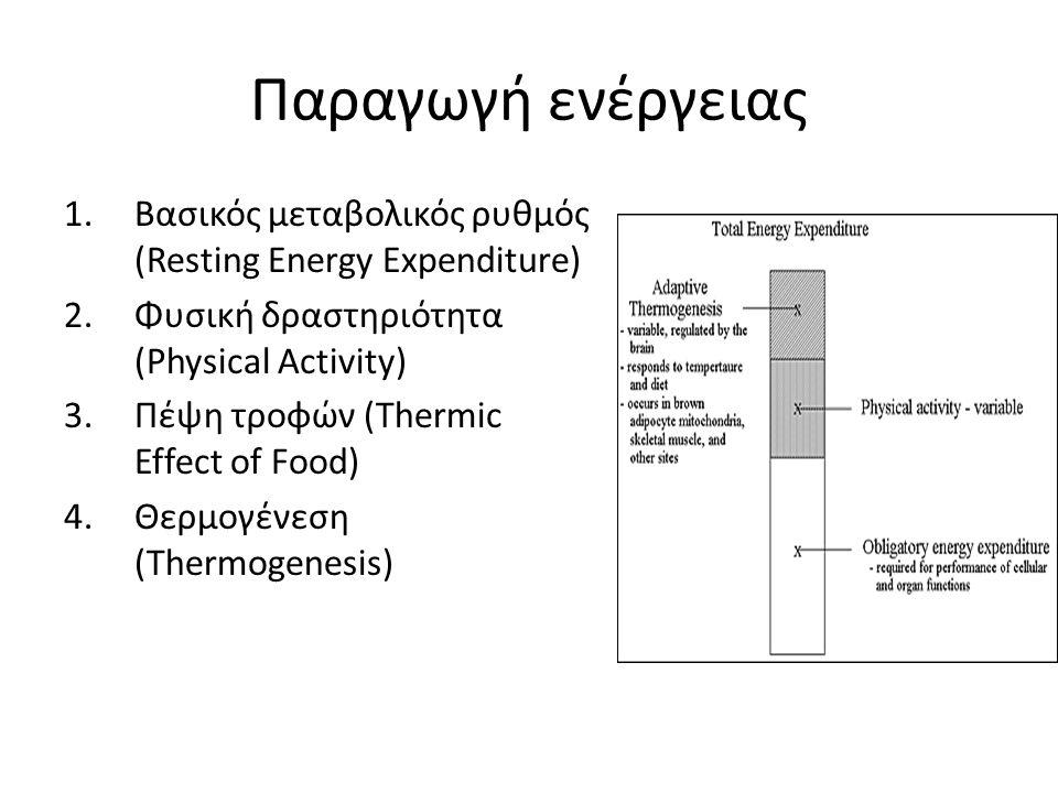 Παραγωγή ενέργειας 1.Βασικός μεταβολικός ρυθμός (Resting Energy Expenditure) 2.Φυσική δραστηριότητα (Physical Activity) 3.Πέψη τροφών (Thermic Effect of Food) 4.Θερμογένεση (Thermogenesis)