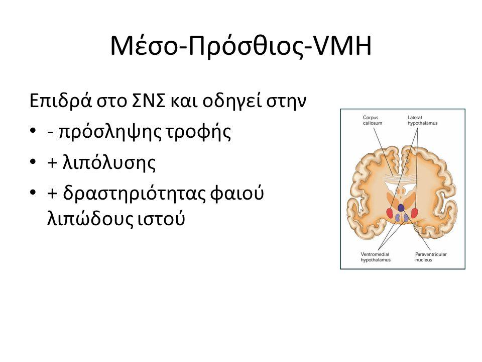 Μέσο-Πρόσθιος-VMH Επιδρά στο ΣΝΣ και οδηγεί στην - πρόσληψης τροφής + λιπόλυσης + δραστηριότητας φαιού λιπώδους ιστού