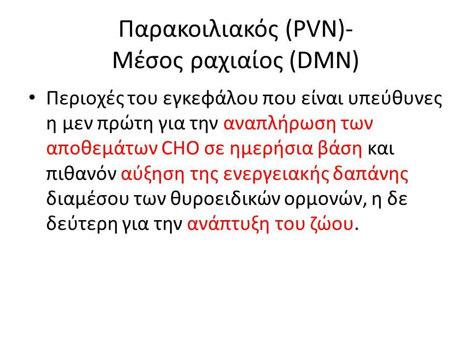 Παρακοιλιακός (PVN)- Μέσος ραχιαίος (DMN) Περιοχές του εγκεφάλου που είναι υπεύθυνες η μεν πρώτη για την αναπλήρωση των αποθεμάτων CHO σε ημερήσια βάσ